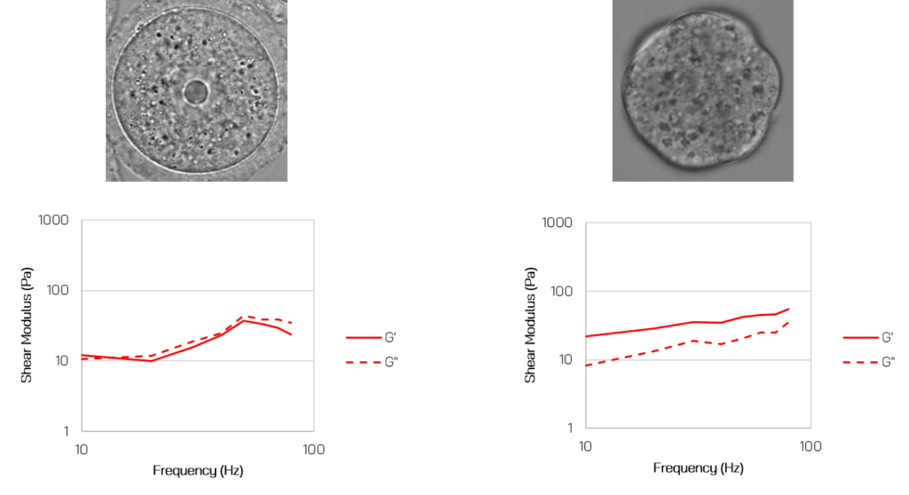 cell elasticity and viscosity shear moduli in mouse oocytes and embryos