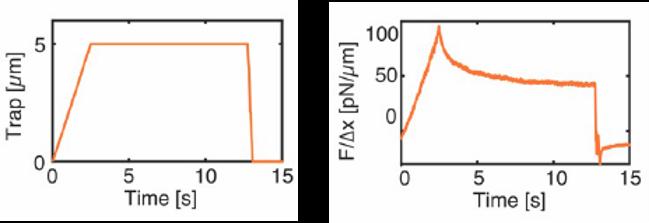 Cell nucleus mechanotransduction study via indentation with optical tweezers